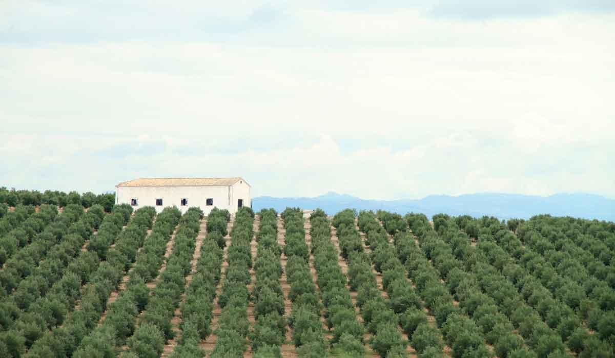Quelle culture agricole est la plus rentable Maroc ?